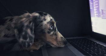 Tellington Ttouch dokáže psovi pomôcť prekonať strach a nielen to