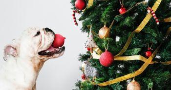10 tipov ako ochrániť vianočný stromček pred tvojim psom