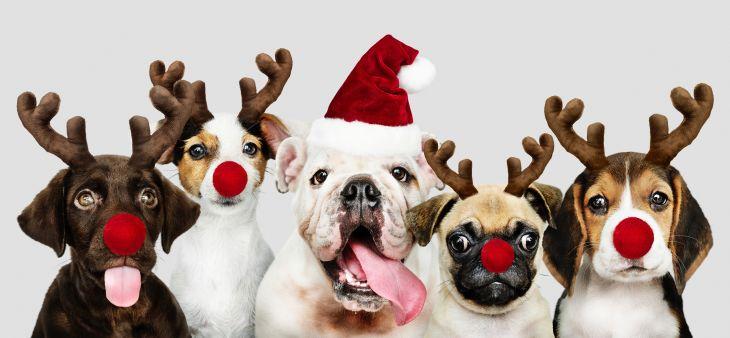vianoce so psom, bezpečné vianoce so psom
