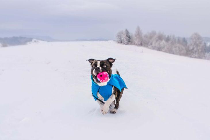zimná bunda pre psa, bunda pre psa ruffwear, športová bunda pre psa, modrá bunda pre psa, tyrkysová bunda pre psa