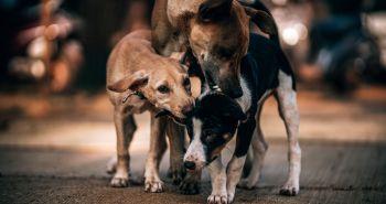 Nový výskum na svete. Pomáha kastrácia psa pri riešení jeho agresivity?