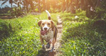 Holistický prístup ako prvá pomoc pri rakovine u psov