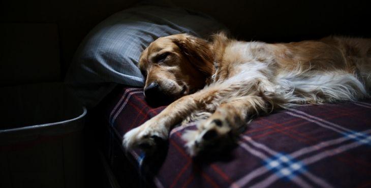 Čo robiť keď pes narúša tvoj spánok?