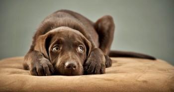 Má tvoj pes strach z búrky? Tu je 5 rád ako mu pomôcť!