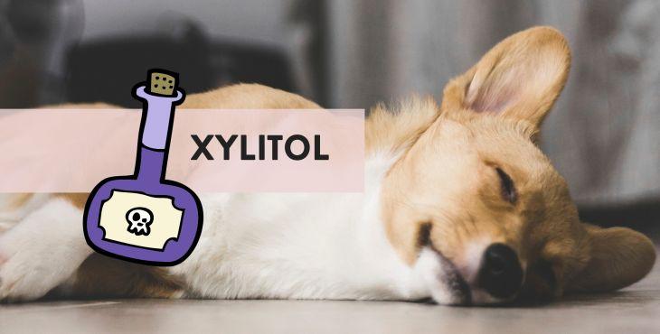 Môj pes zjedol xylitol? Hrozí mu otrava?