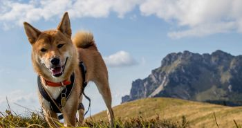 Tip na výlet so psom:  vrch Osnica v Malej Fatre