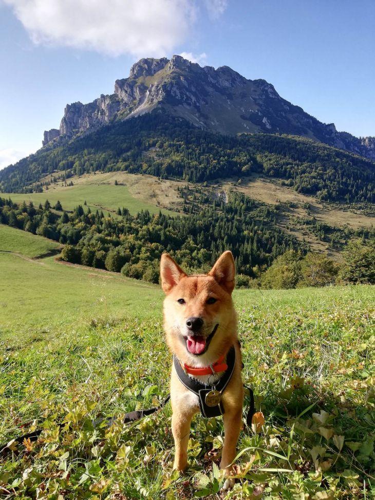Tip na turistiku so psom Osnica (vrch)