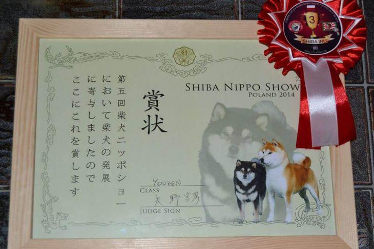 nippo show diplom