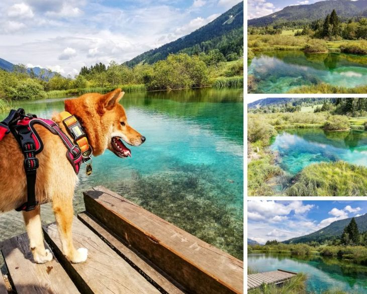 Slovinsko so psom