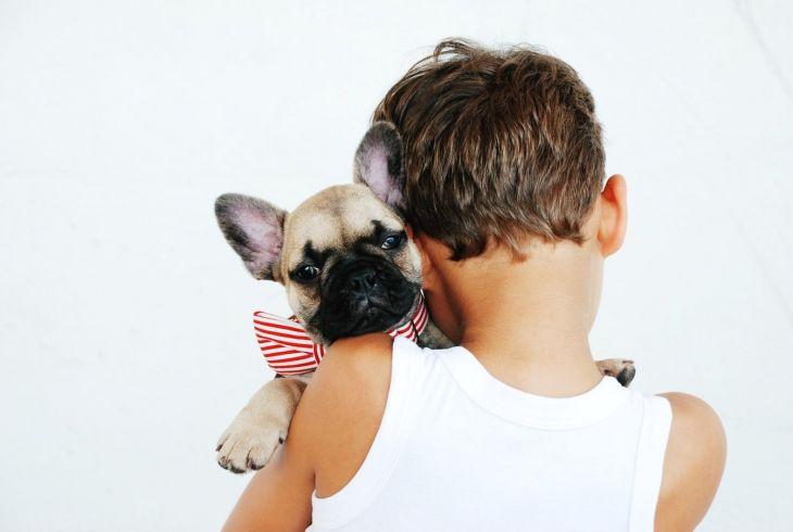 pes vhodný k deťom, francúzsky buldoček