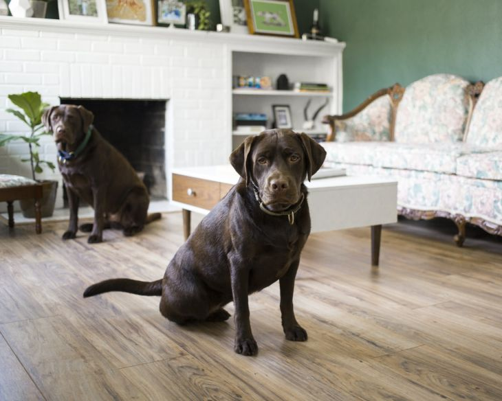 pes vhodný k deťom, labrador