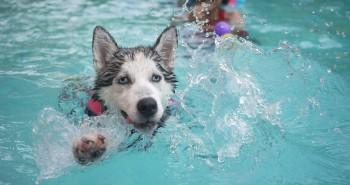 Miluje tvoj pes plávanie?