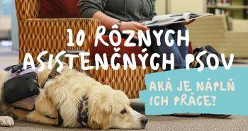 10 rôznych asistenčných psov. Aká je náplň ich práce?