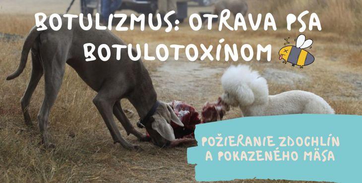 Botulizmus: otrava psa botulotoxínom. Príčina? Požieranie zdochlín a pokazeného mäsa