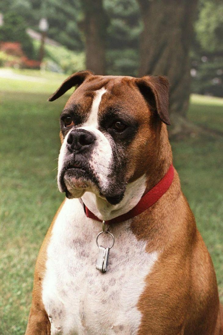 pes boxer