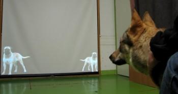 Môže  pes zistiť veľkosť iného psa, len na základe vrčania?