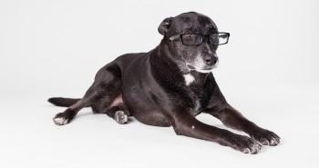 5 dôvodov prečo sú staršie psy úžasné