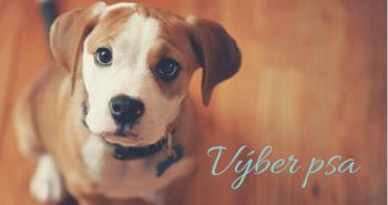 Výber psa – čo ti musí byť jasné pred tým, ako si zaobstaráš psa