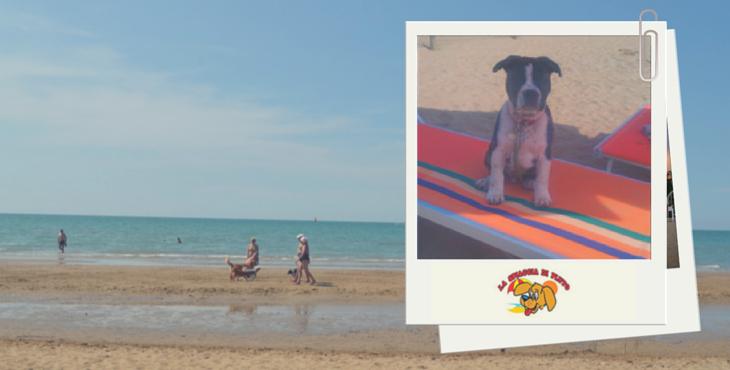 La spiaggia di Pluto - pláž pre psov v talianskom Bibione