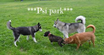 Psí park – patríš do neho aj ty s tvojím psom?