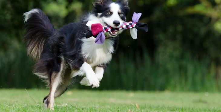 2 jednoduché spôsoby ako naučiť psa APORT
