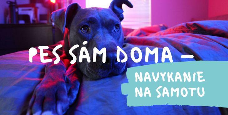 Pes sám doma – navykanie na samotu