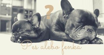 Pes alebo fenka?