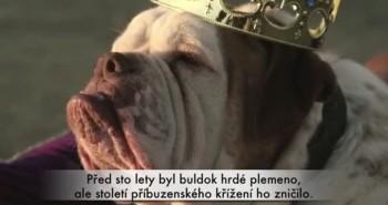 Čistokrvné psie plemeno či kríženec?