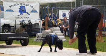 Bull športy