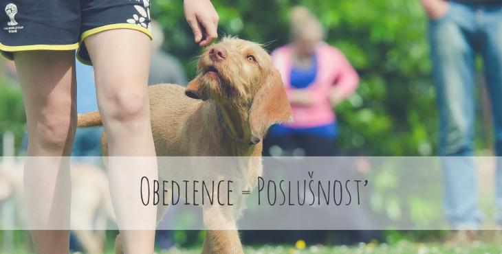 Áno, aj ty sa môžeš venovať Obedience!