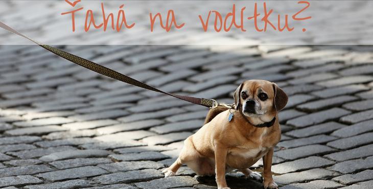 Pes ťahá na vodítku, ako ho to odnaučiť?