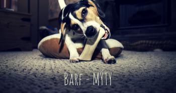 BARF – Mýty o kŕmení psa čerstvou potravou
