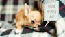 10 vecí, ktorými ľudia stresujú svojich psov