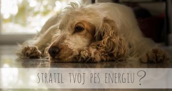 Má tvoj pes málo energie? Toto mu môže pomôcť!