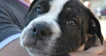 Čo spôsobuje očný kontakt s tvojim psom?