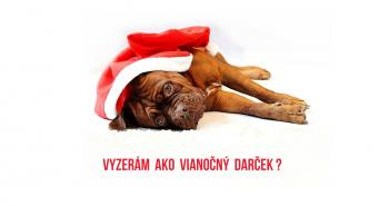 """Pes ako darček na Vianoce """"Mami? Ja by som chcel na Vianoce šteniatko!"""""""
