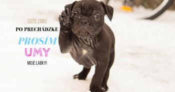 Nepodceňuj umývanie labiek tvojho psa v zime!