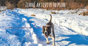 Zimné tipy na aktivity pre teba a tvojho psa