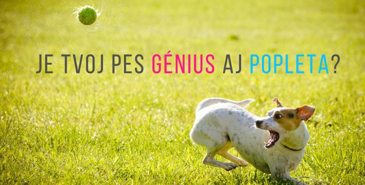 Génius i popleta. Jak psa naučit, aby to co umí, zvládal za všech okolností?