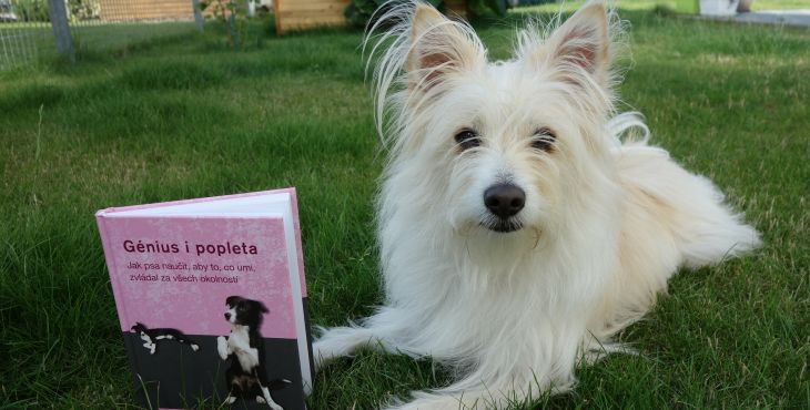 RECENZIA: Génius i popleta. Jak psa naučiť, aby to, co umí, zvládal za všech okolností