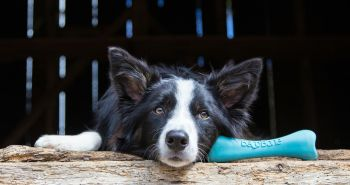 Ekologické hračky pre psov. Predražená zbytočnosť alebo ideálny štandard?