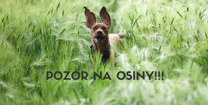 Osina - nebezpečenstvo pre tvojho psa