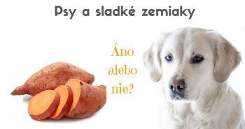 Môžu psy jesť sladké zemiaky?