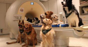 Psy rozumejú tomu, čo hovoríme a ako to hovoríme. Ako je to možné?
