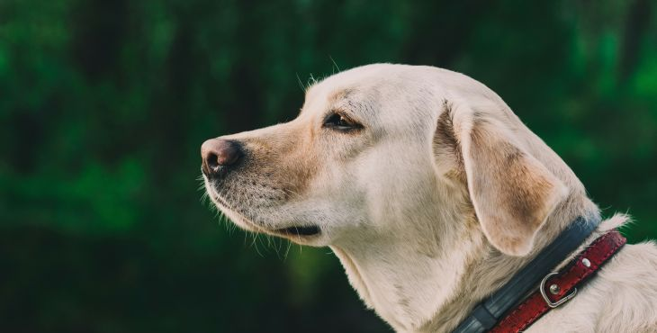 6 ľudských ochorení, na ktoré ťa pes upozorní skôr ako lekári – I. časť