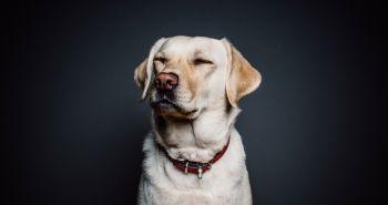6 ľudských ochorení, na ktoré ťa pes upozorní skôr ako lekári – II. Časť