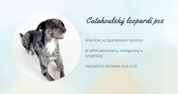 Catahoulský leopardí pes (Catahoula leopard dog)