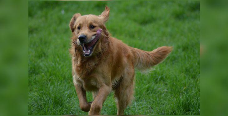 Ako zistíš, či je tvoj pes tým správnym parťákom na beh?