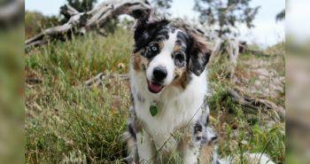 Poznáš dôvod, prečo psy krútia hlavou keď na nich hovoríme?
