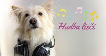 Hudba a jej zázračné účinky na psa. Čo všetko dokáže?